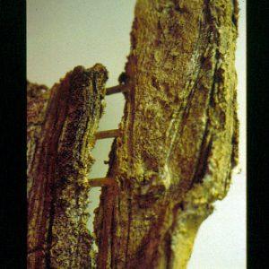 ESCUDO (DETALLE) - 1995 - PAPEL HECHO A MANO SOBRE MOLDE Y RAMA DE ÁRBOL - 0,60 m x 0,83 m x 0,09 m
